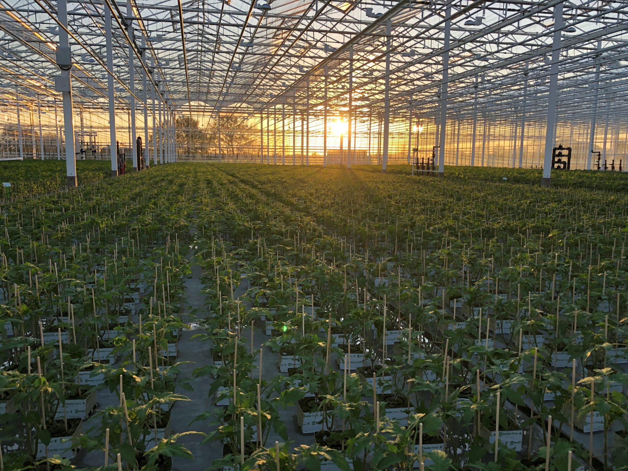 plants couché soleil